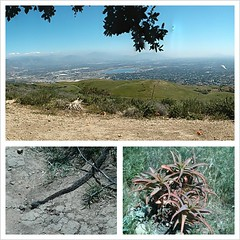 Today's hike had lizards snakes and bees.