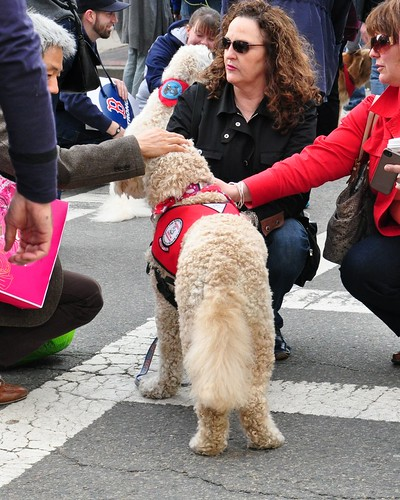Therapy Dogs at Boston Marathon Bombing Memorial