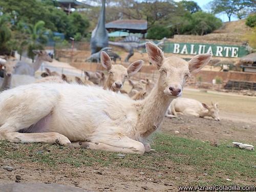 Image result for baluarte animals