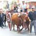 """2012-07-29-feria-almoradi-desfile-animales-tradicionales • <a style=""""font-size:0.8em;"""" href=""""http://www.flickr.com/photos/51501120@N05/7669696178/"""" target=""""_blank"""">View on Flickr</a>"""