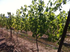Mount Hood Winery