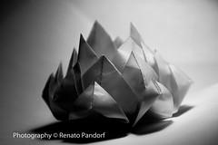 Paper lotus B&W