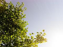 Sunny Days!