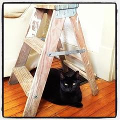 Happy Halloween (if a black cat lays under a l...