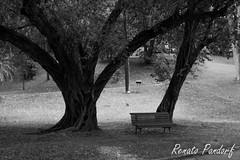 Bench beneath trees