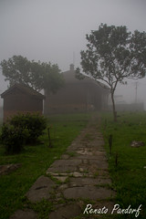 Pathway to the misty house