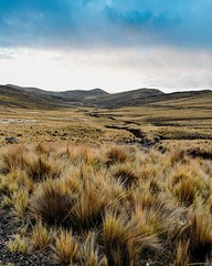 Day 534. Spent a great four days in Chincha Alta to watch Wentz and heal the ankle. Now it's time to get moving, I should probably stay one more day so my ankle is 100% but I can't sit around any longer. Back into the great wide world today. #theworldwalk