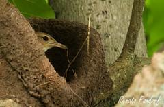 Assembling a nest