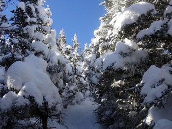 Mt. Madison Valley Way Trail winter hike
