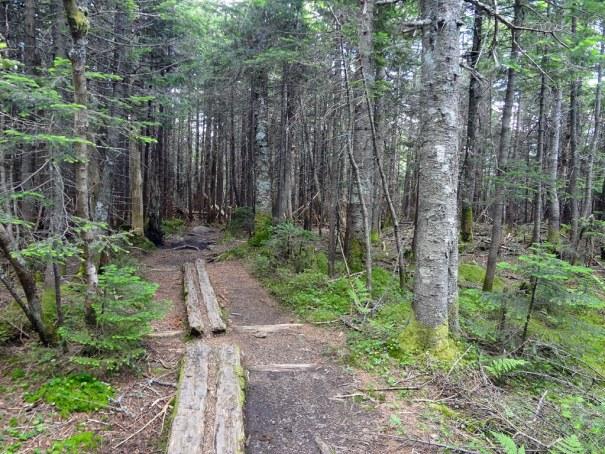 Planks on Garfield Ridge Trail