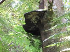 Fungus on Rangitoto