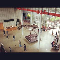 Tyrannosaurus from above