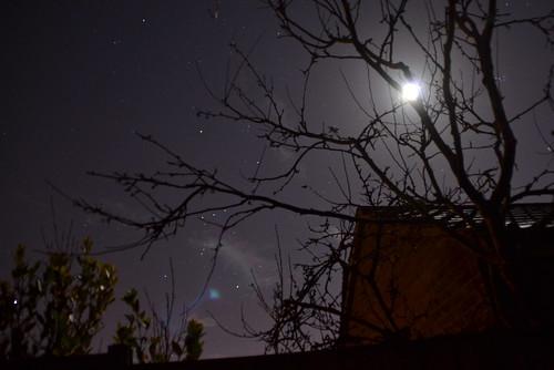 Orion on Christmas Night
