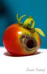 Rotten tomato (IV)