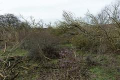 Coxyde - Février 2013 - Natuurgebied Noordduinen