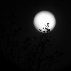 Moonbuds