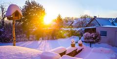 Winter Wonderland // Daybreak