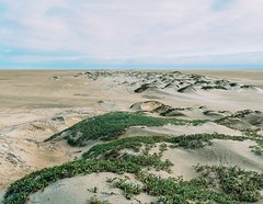 Day 474. All along the Peruvian coast is desert, so I'm not finished with it, but I made it through the single longest stretch. I'm rewarding myself with the day off. Savannah and I might go for a walk around the block, but probably we'll just lay in our