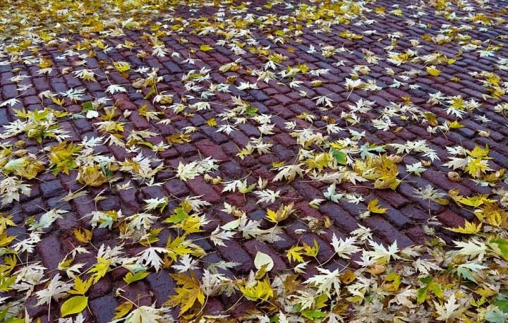 leaves by Dean Hochman, on Flickr