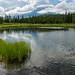 "20160626-Alaska-202 • <a style=""font-size:0.8em;"" href=""http://www.flickr.com/photos/41711332@N00/28274117586/"" target=""_blank"">View on Flickr</a>"