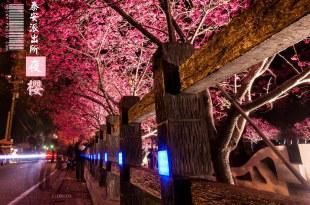 【后里】。台灣中部賞夜櫻何處去? 后里泰安「櫻花派出所」60株浪漫八重櫻
