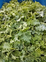 "Kale • <a style=""font-size:0.8em;"" href=""http://www.flickr.com/photos/61175668@N08/16845260002/"" target=""_blank"">View on Flickr</a>"