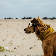 Day 473. They're not her favorite thing to wear, but when the wind picks up and the sand starts flying the doggles are going on. #theworldwalk #travel #peru