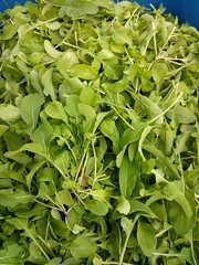"Arugula • <a style=""font-size:0.8em;"" href=""http://www.flickr.com/photos/61175668@N08/16659032610/"" target=""_blank"">View on Flickr</a>"