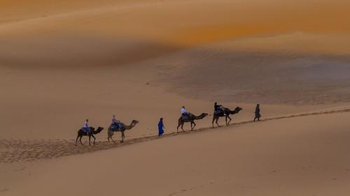 Kamele in der Wüste II