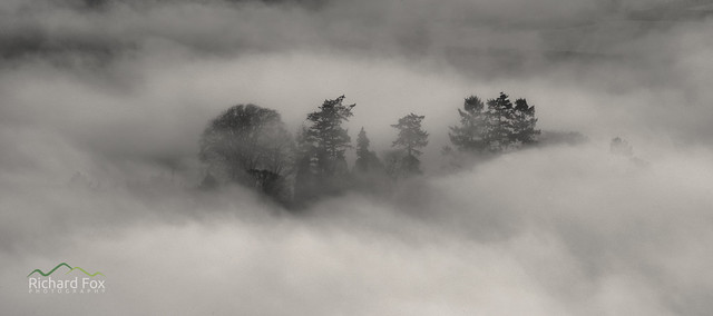 Cleaved Mists