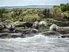 Farne Islands