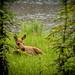 "20160627-Alaska-390 • <a style=""font-size:0.8em;"" href=""http://www.flickr.com/photos/41711332@N00/28026600590/"" target=""_blank"">View on Flickr</a>"