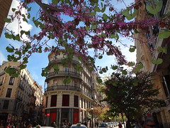 Spring in Madrid