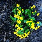 """Spring flowers at the waterside of Arboga river. #spring #arboga #kåfalla #flower #blomma #vår #navår #iphone5s #instafollow #instagram #filter #sweden #visitsweden <a style=""""margin-left:10px; font-size:0.8em;"""" href=""""http://www.flickr.com/photos/131645797@N05/17345336075/"""" target=""""_blank"""">@flickr</a>"""