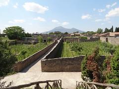 2011 05 12 Pompeii - vineyards