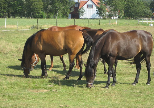 Horses by Särdals Kvarn