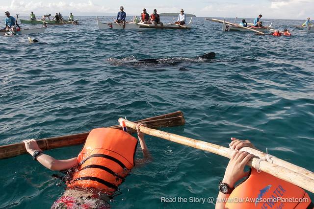 Oslob Whale Watching-14.jpg