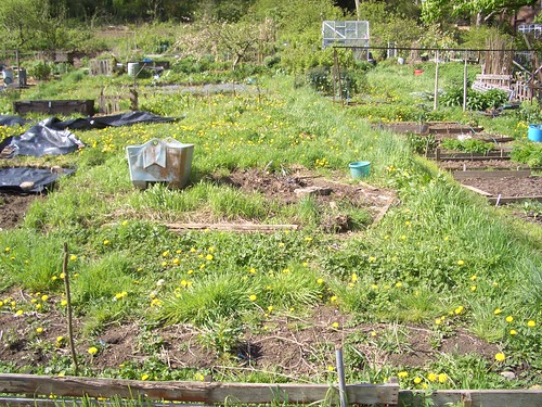 Our Allotment