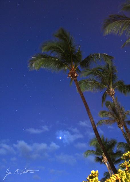 050512 Stars Beach Trees