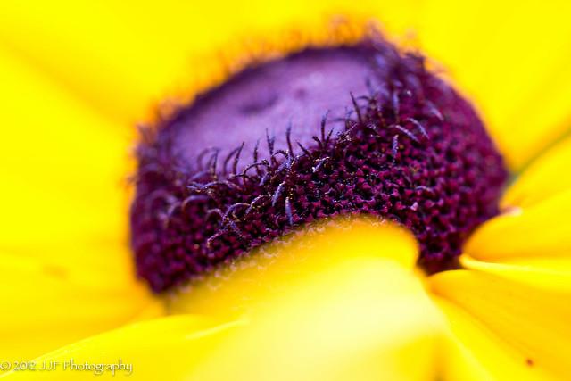 2012_Jul_03_Yellow Flower_026