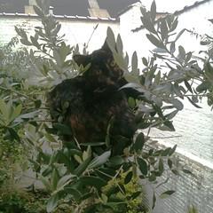 cat-as-tree-fruit