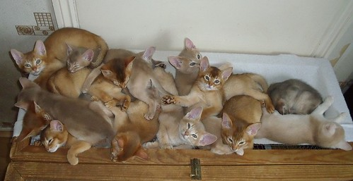 big+pile+of+kittens
