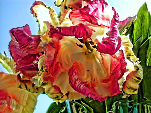 FAF-parrot-tulips-var4