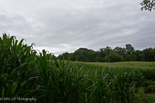 2012_Jul_20_Corn Field_019