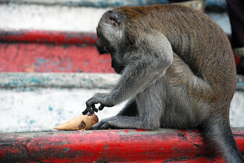 Macaque with ice cream cone