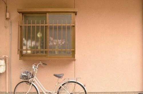 Sakura on the Window
