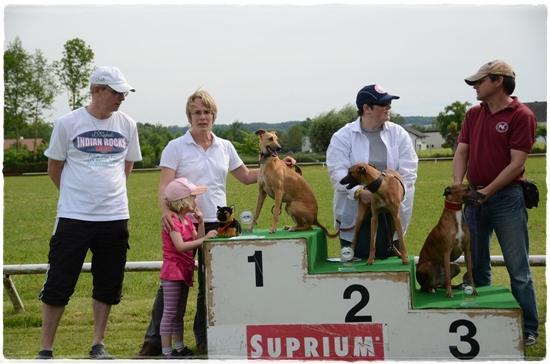 Sieger Whippet Rüden Rennklasse 1-3