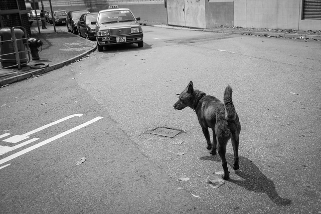 Dogs at the street 4