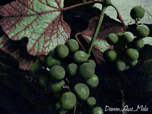 Grapes of Wrath (Photo A Day 18/365) by damn_que_mala