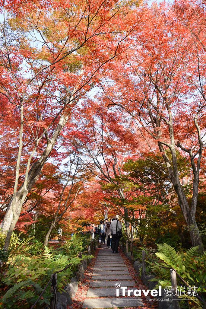 《关西京阪自由行》九天八夜赏枫行程攻略:京都与大阪的红叶共舞银杏美景